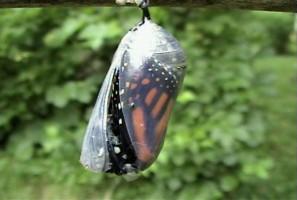 vlinder-297x200